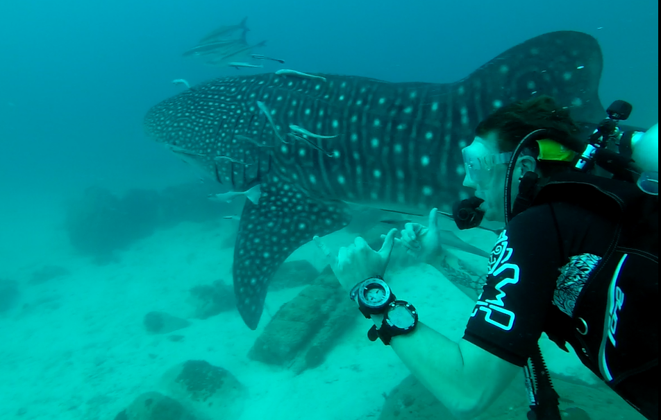 koh rong diving
